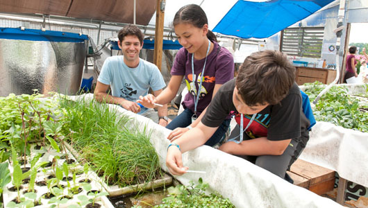 The Food System Lab, CLF's urban teaching farm.